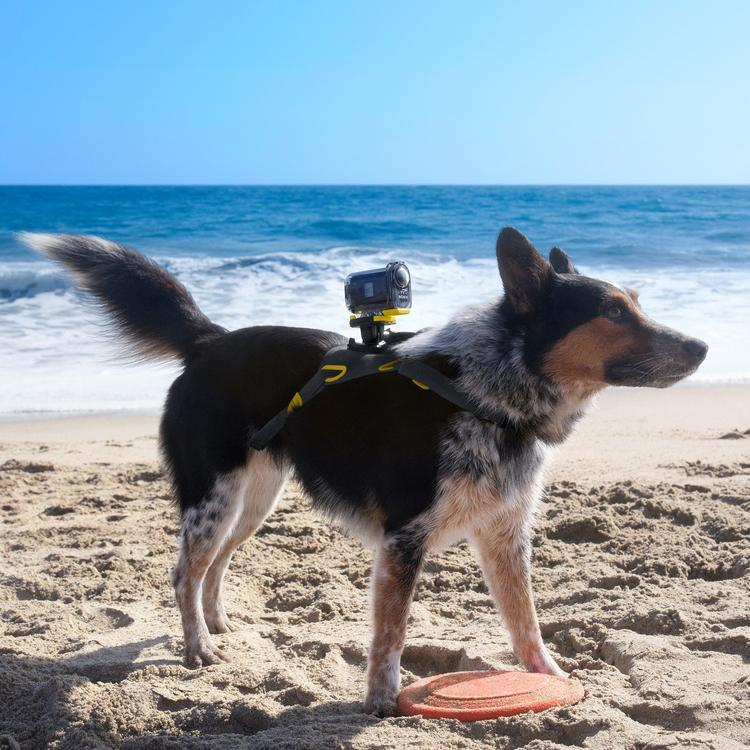 Pet Action Cam