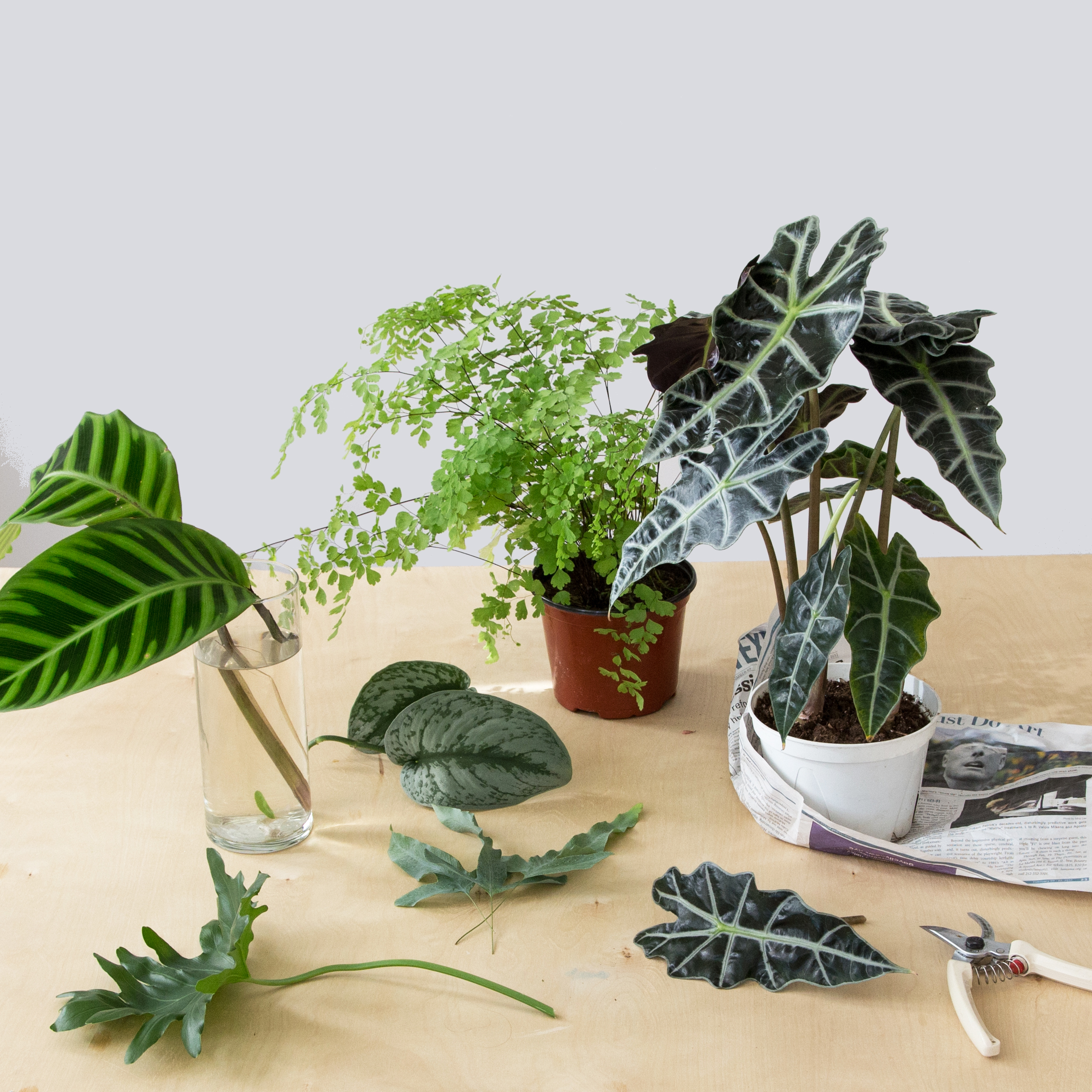 Plants for DIY Foliage Arrangement