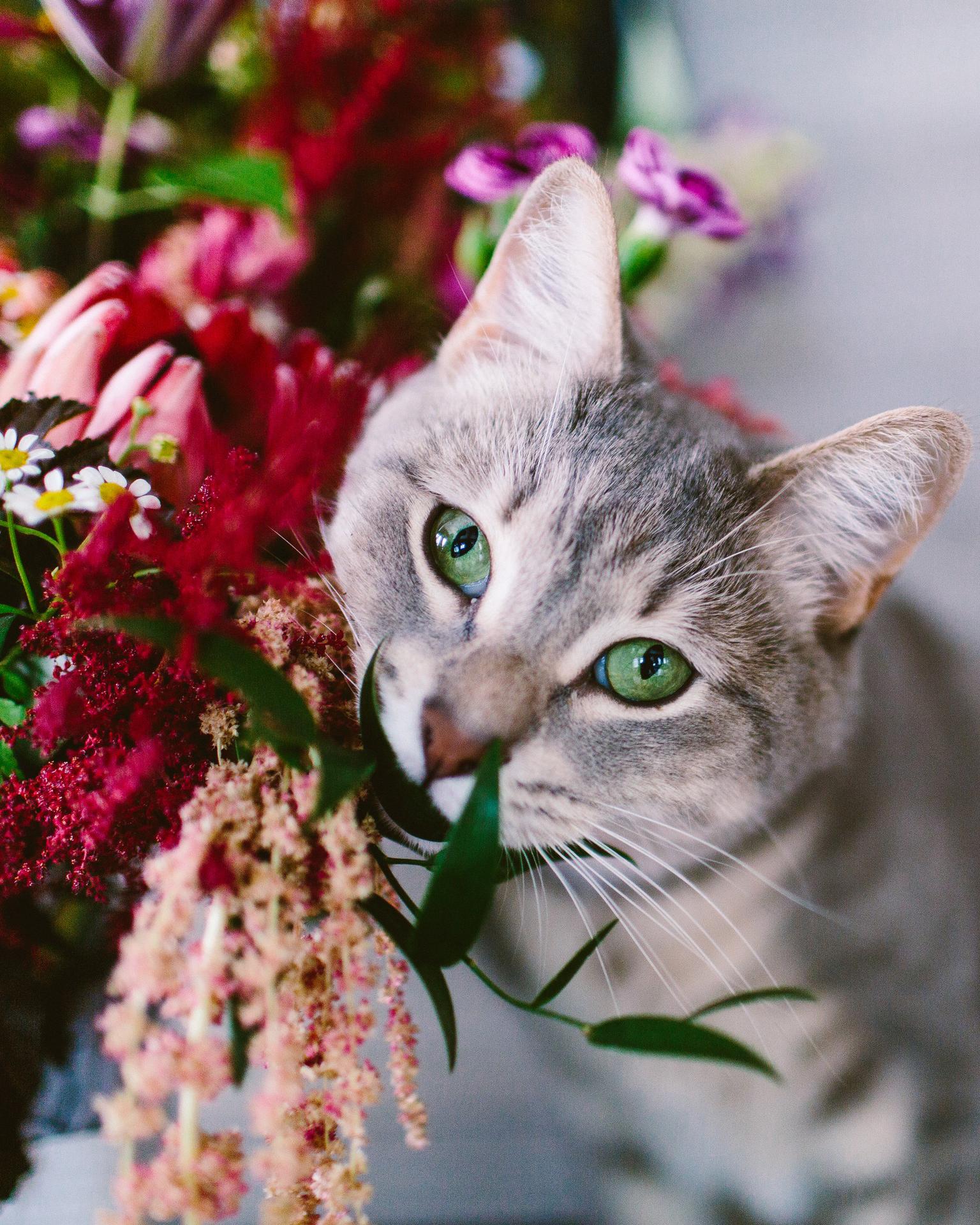 Deb & Meryl's wedding kitty