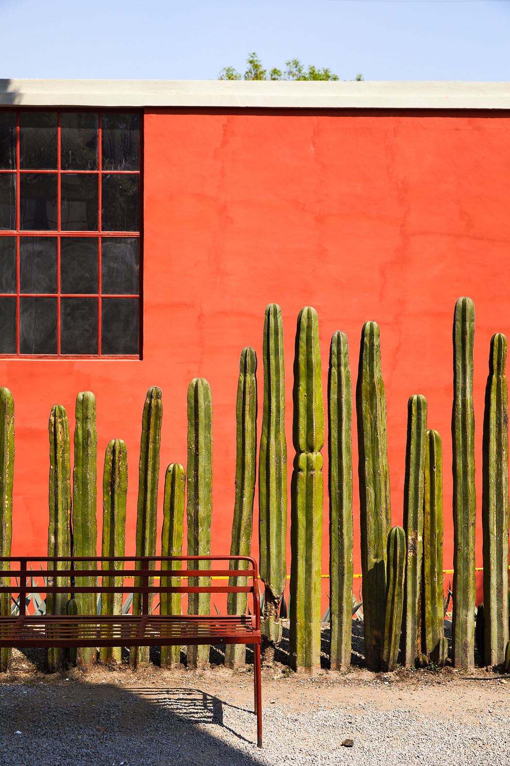 cactus red wall