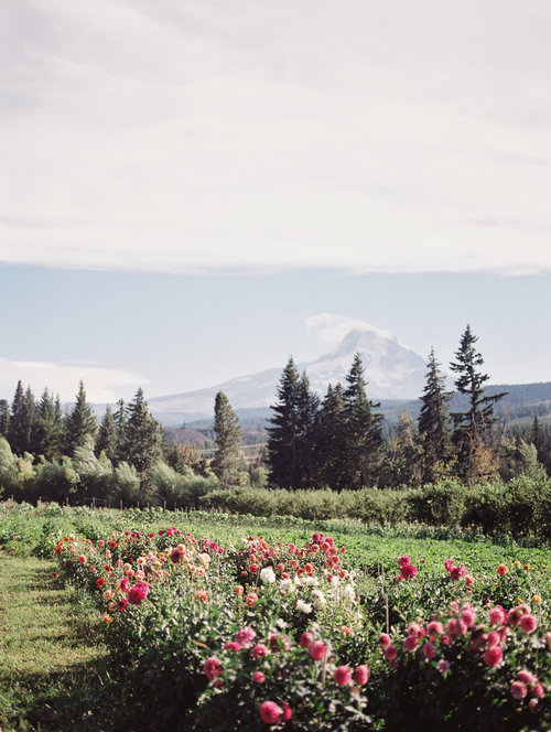 Mt. View Orchards