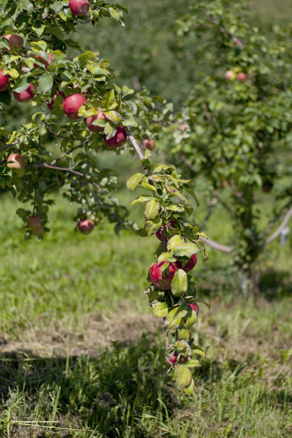 Ecker's Apple Farm
