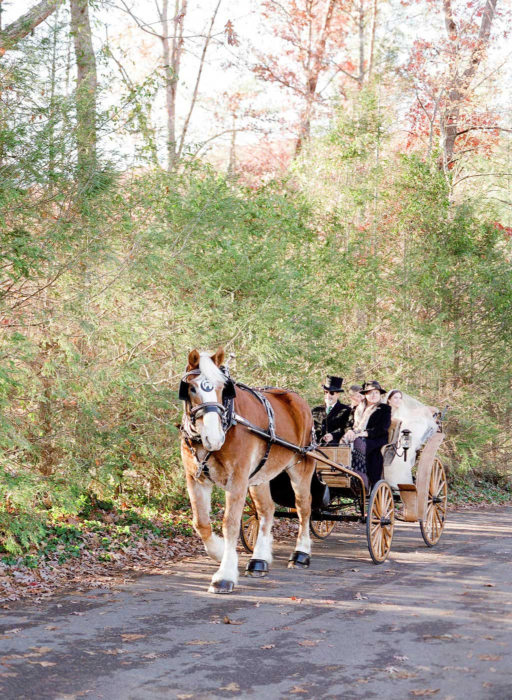 wedding carriage in forrest