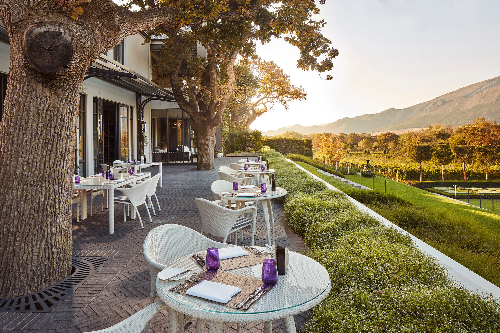 south africa winery landscape sunset