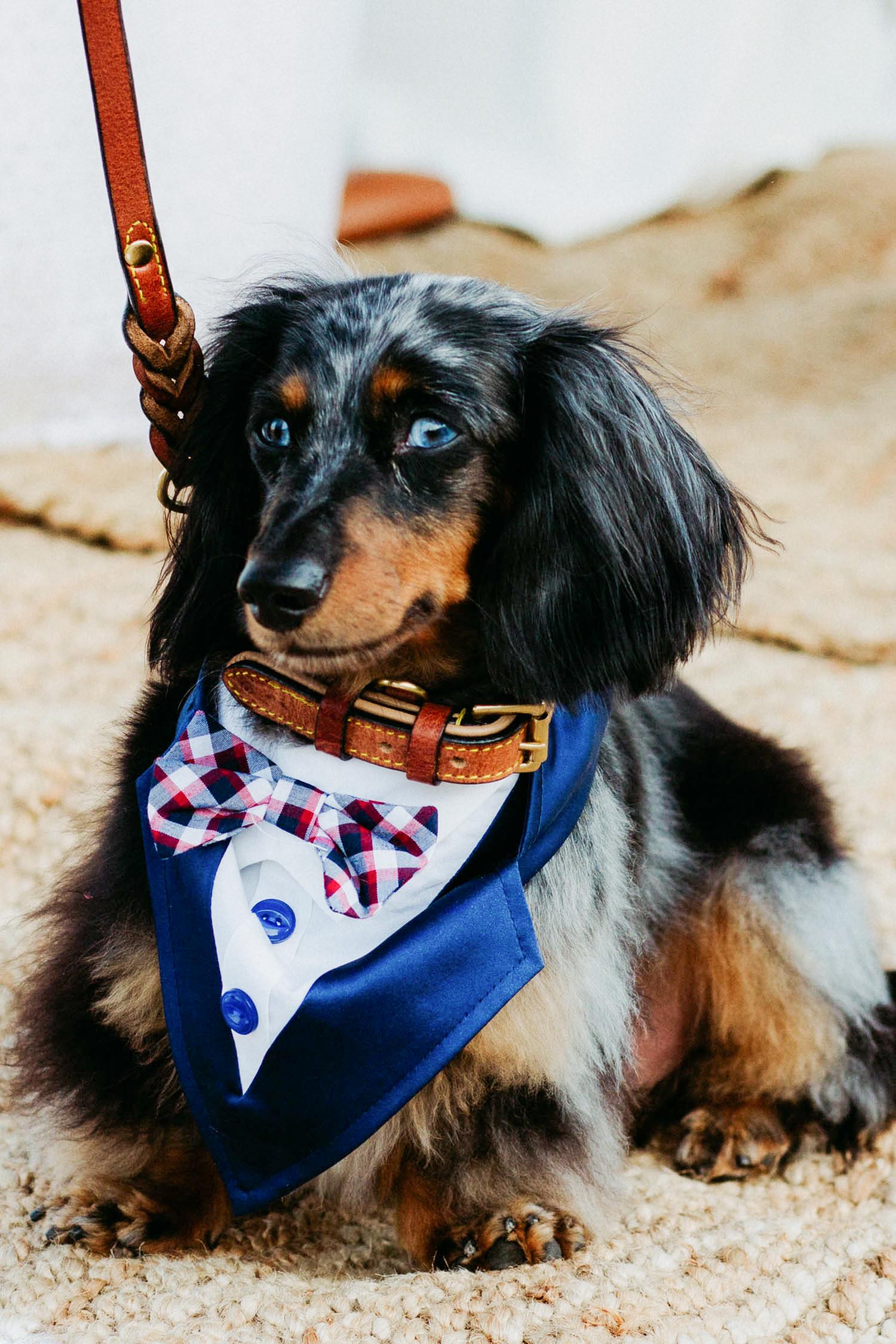 wedding dog bow tie