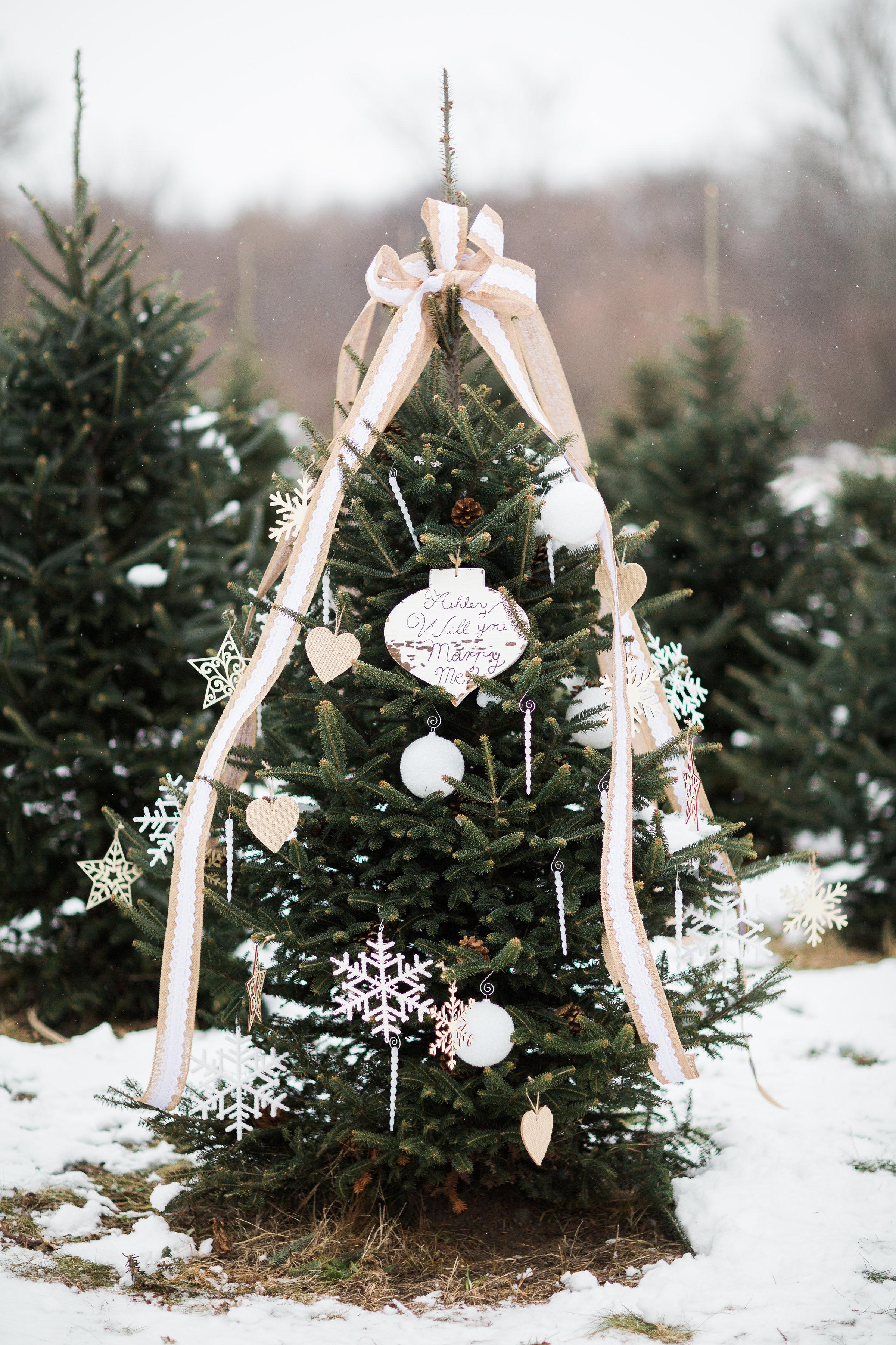 christmas-tree-ideas-rebecca-haley-photography-1117