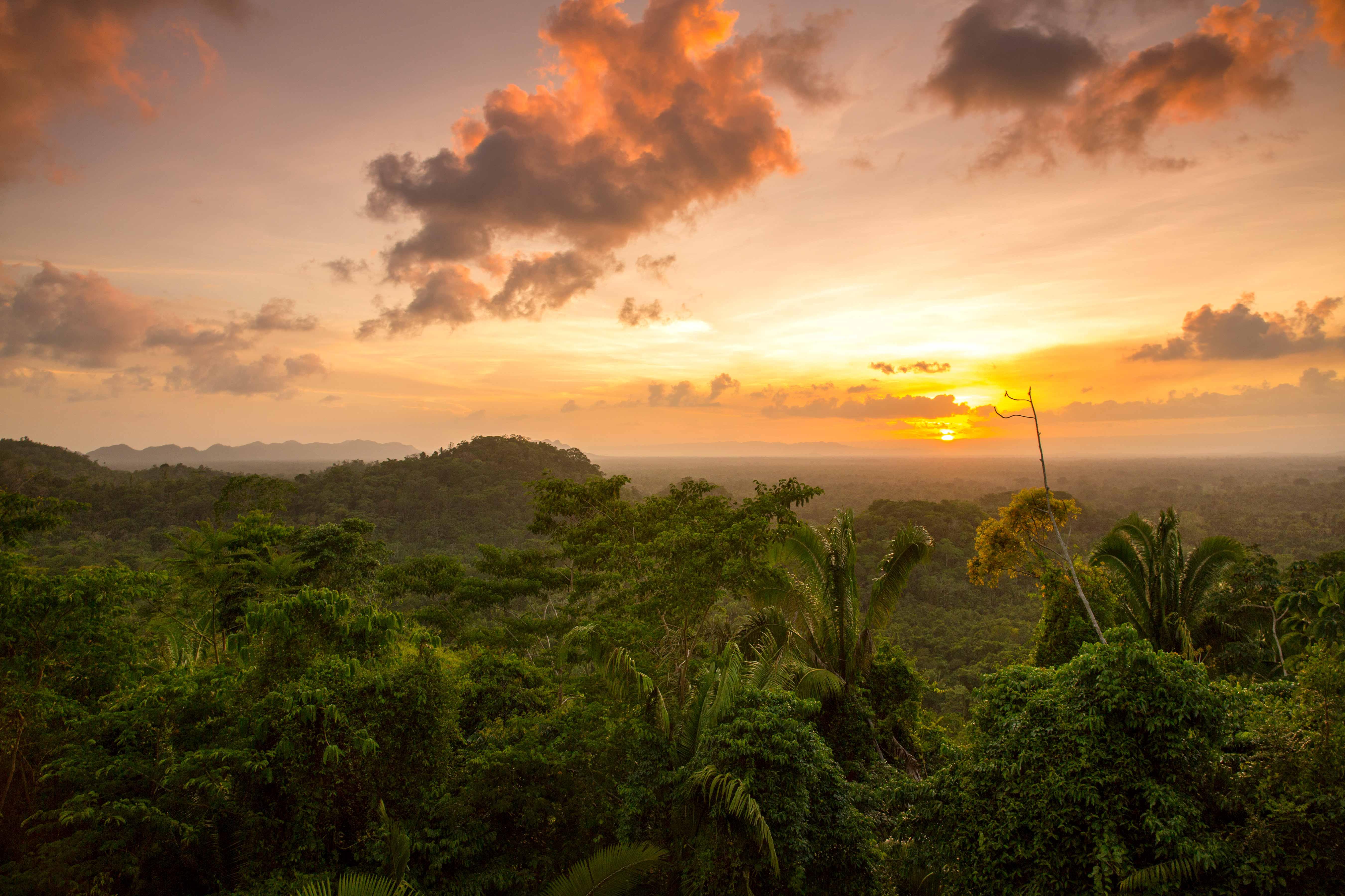 sunset jungle