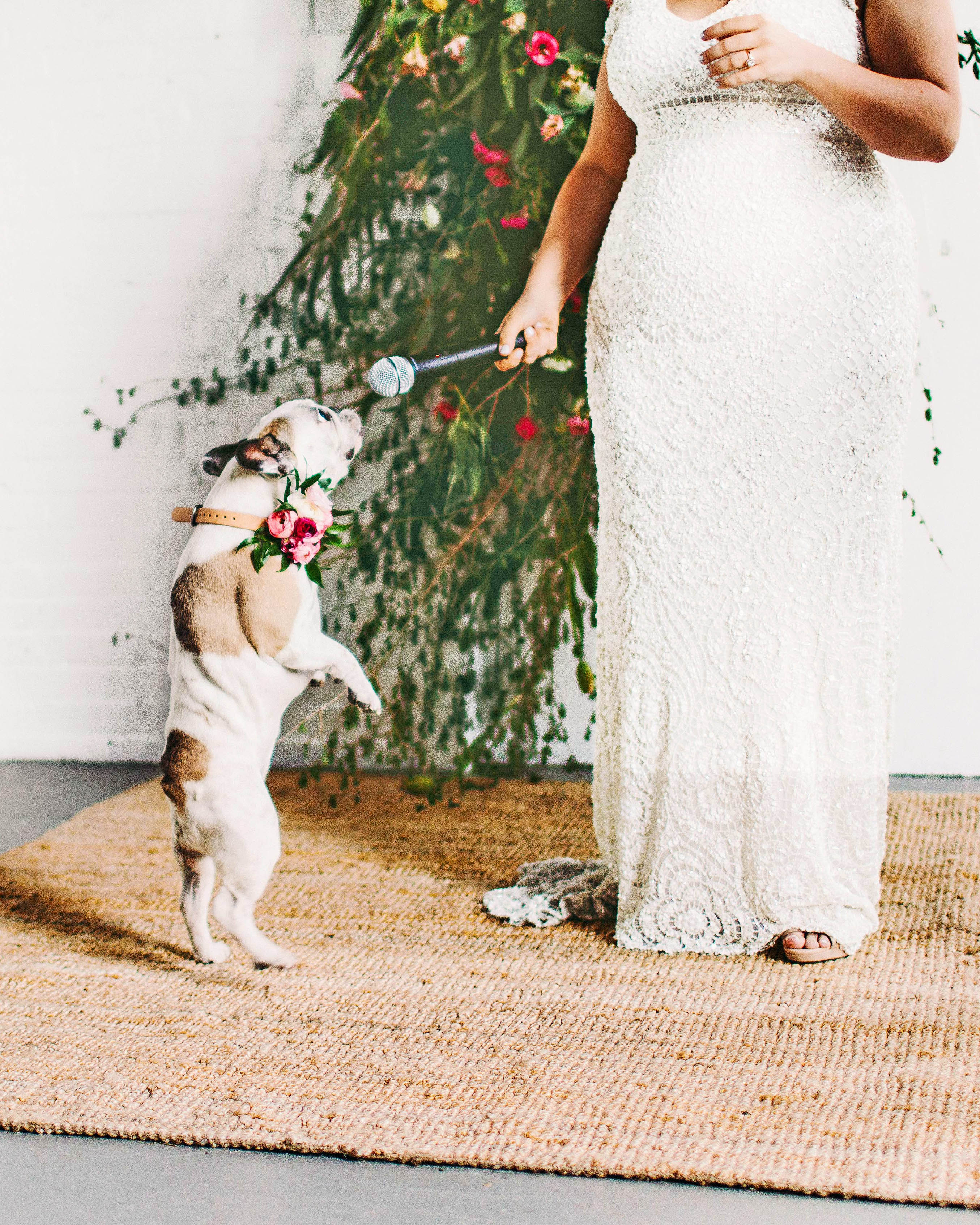 sara ryan wedding philadelphia dog