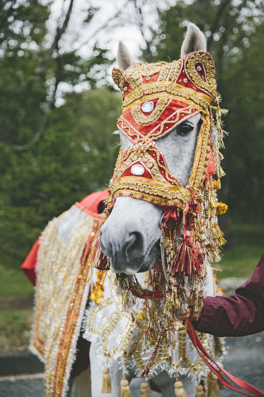 sanjay steven wedding baraat horse