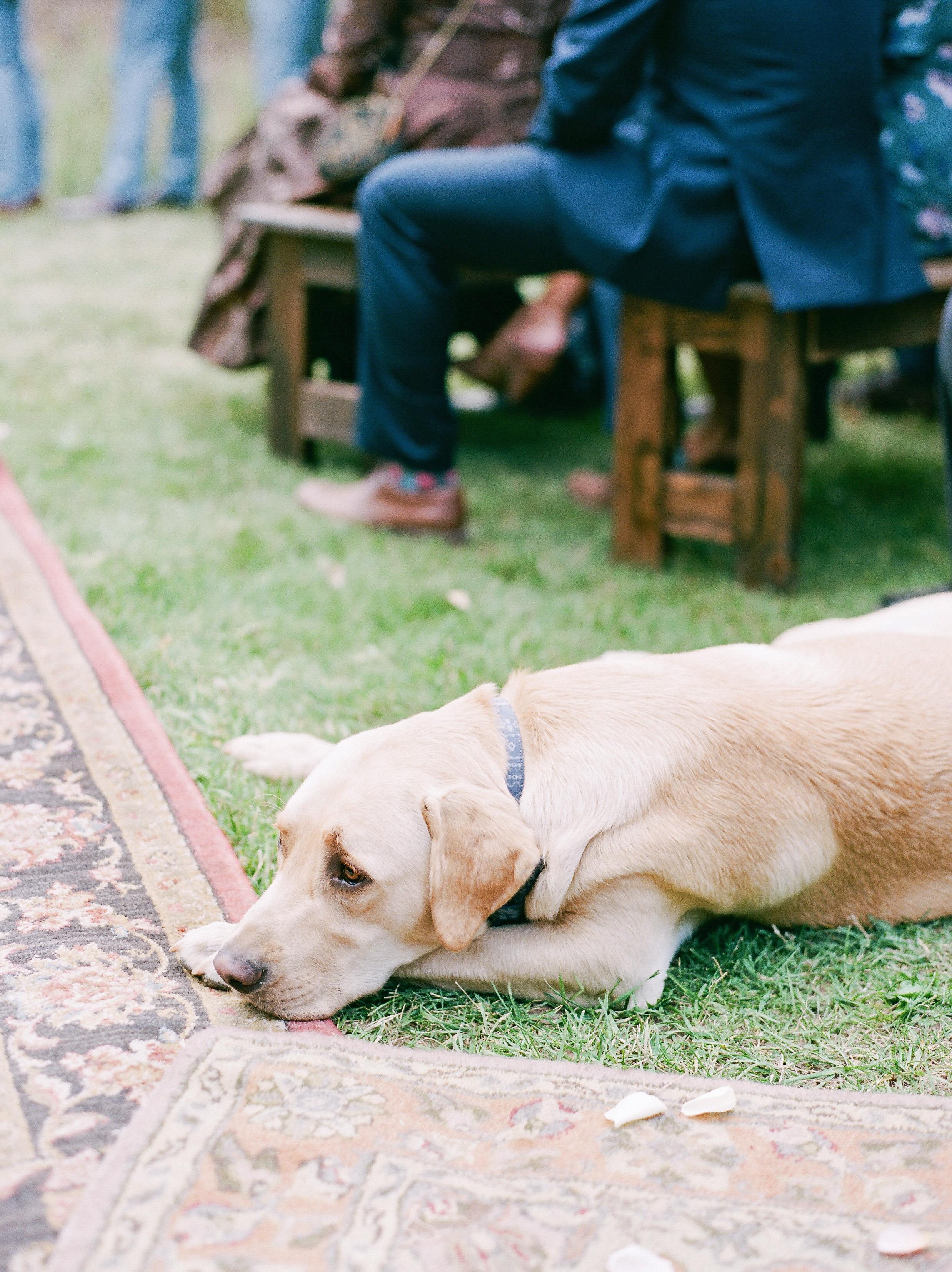 margaux patrick wedding ceremony dog