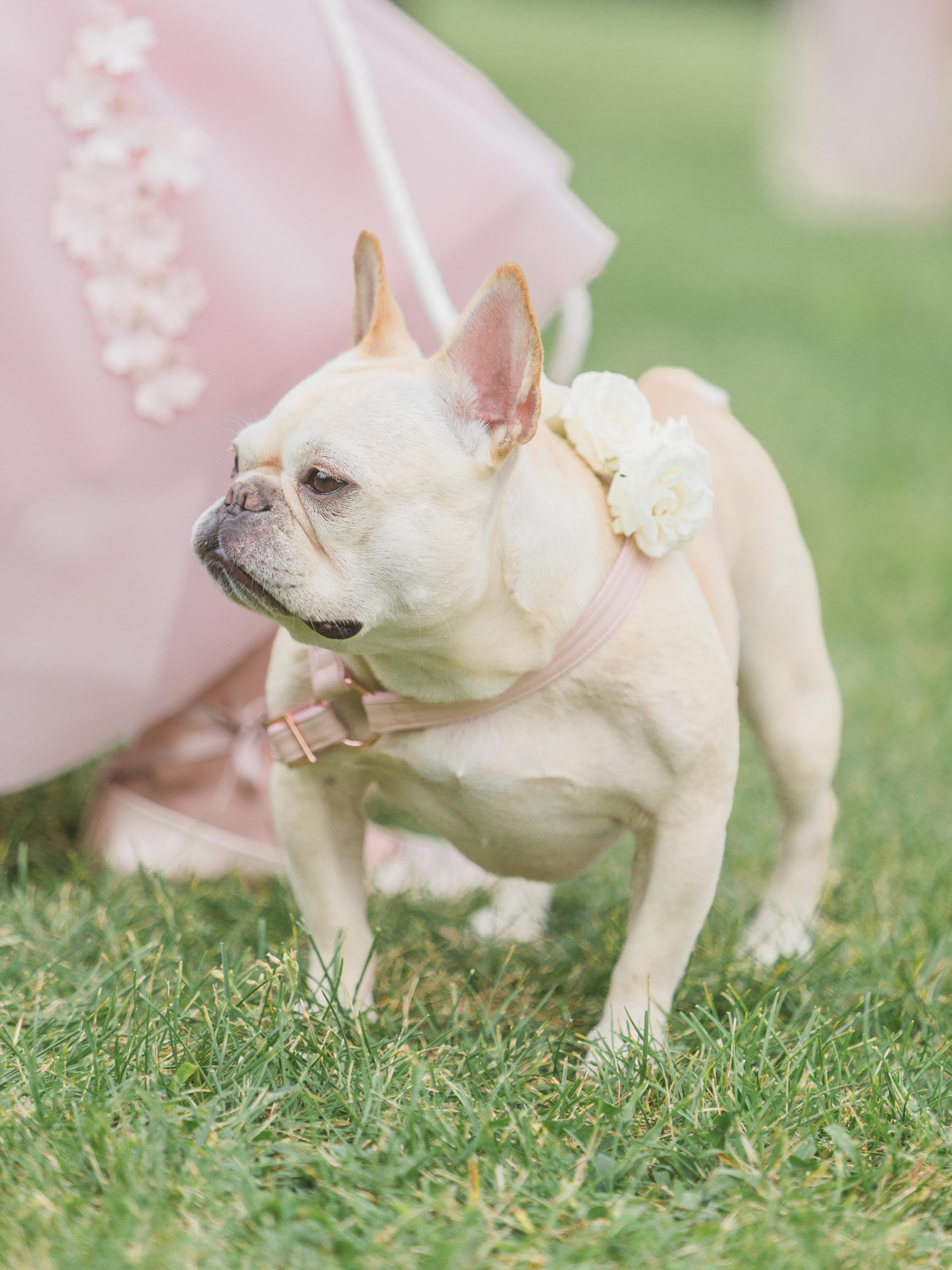 ashley samantha wedding cornwall ny dog