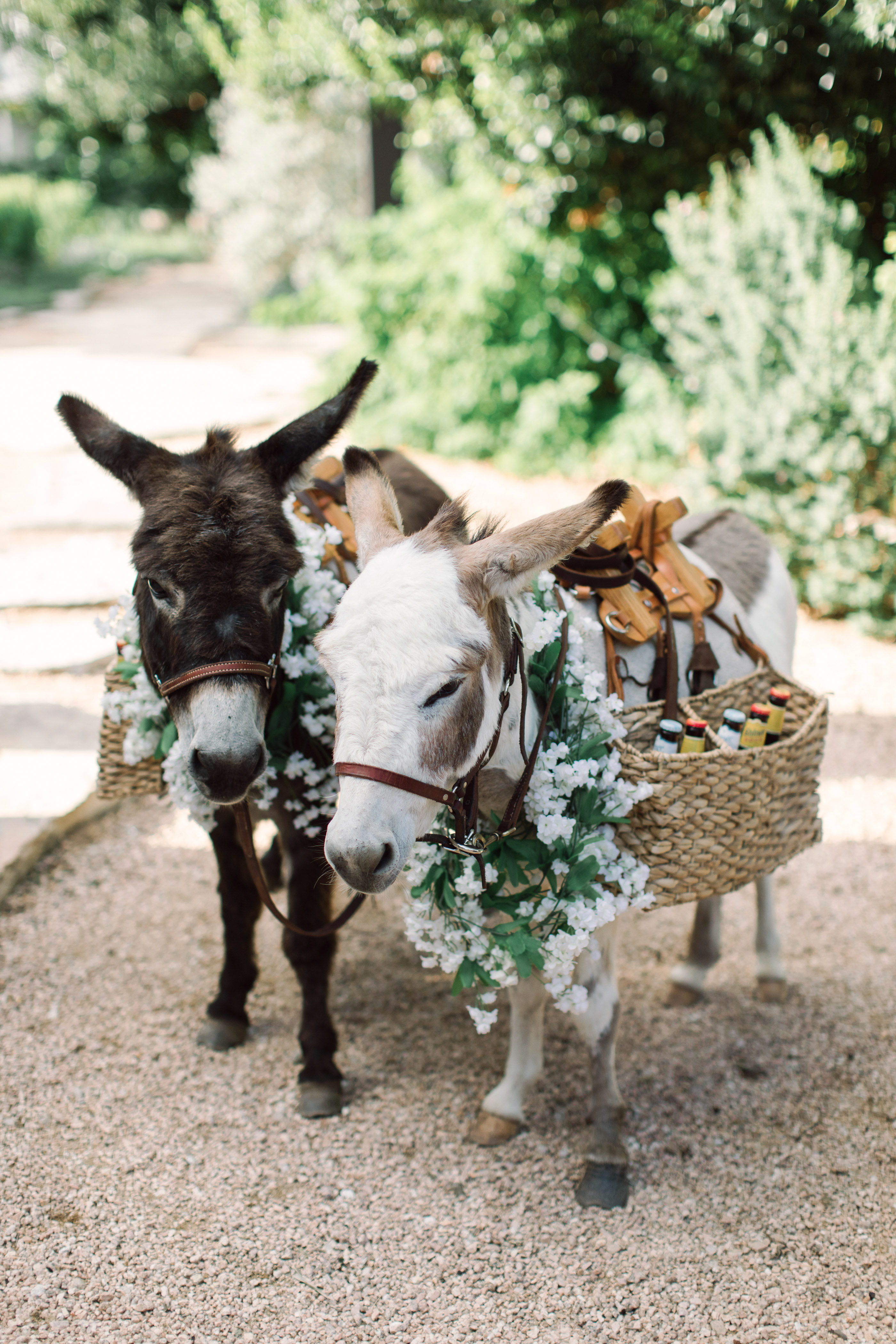 wedding donkeys drink basket flowers