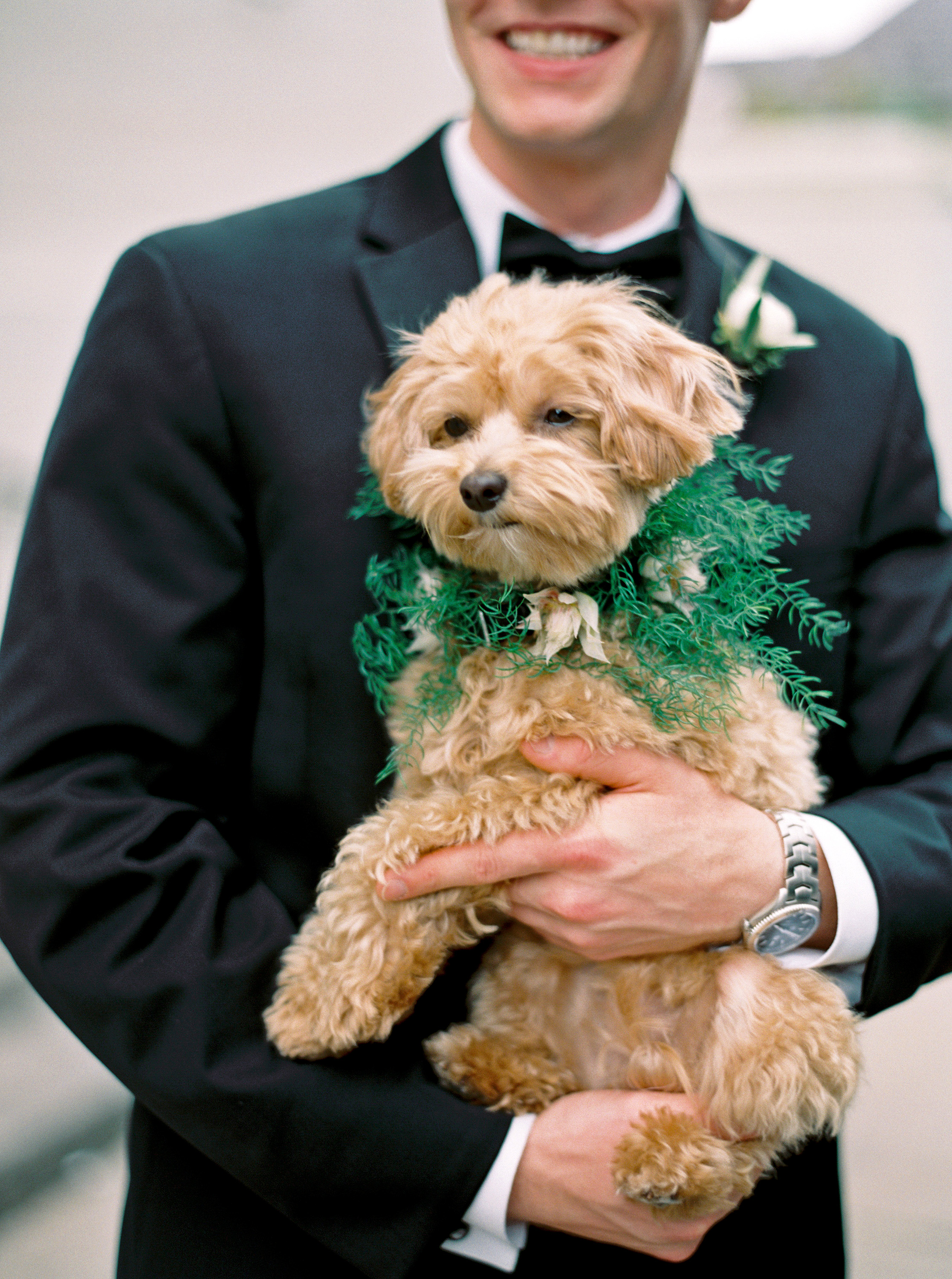 kate austin wedding dog groom