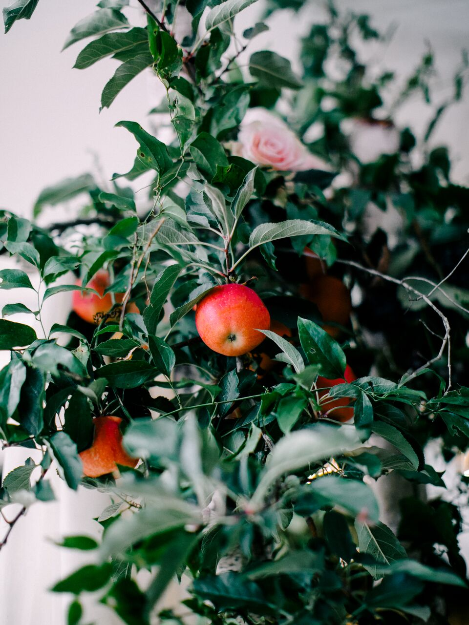 apple wedding ideas love by serena