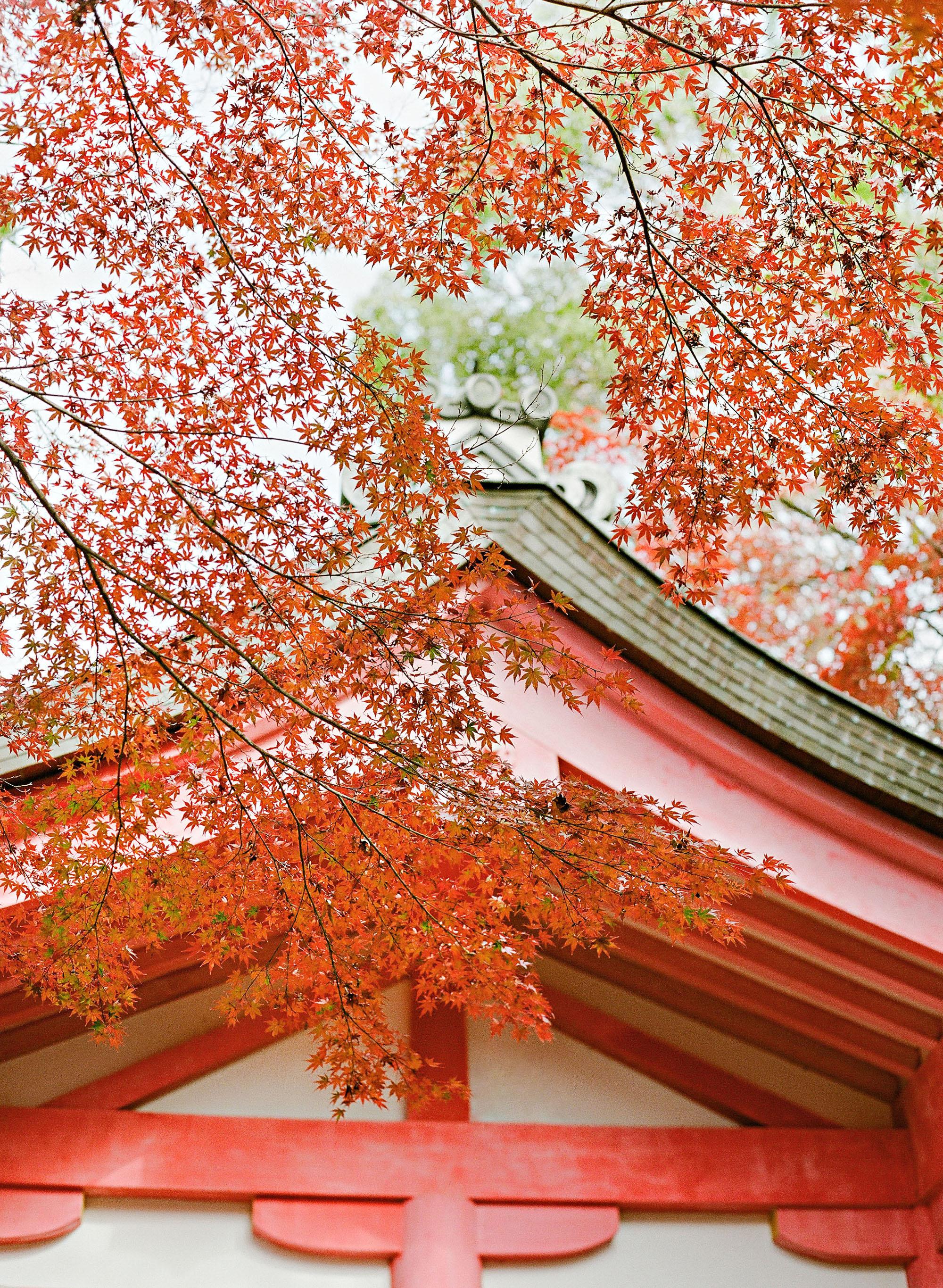 addie richard wedding japan japanese maples temple