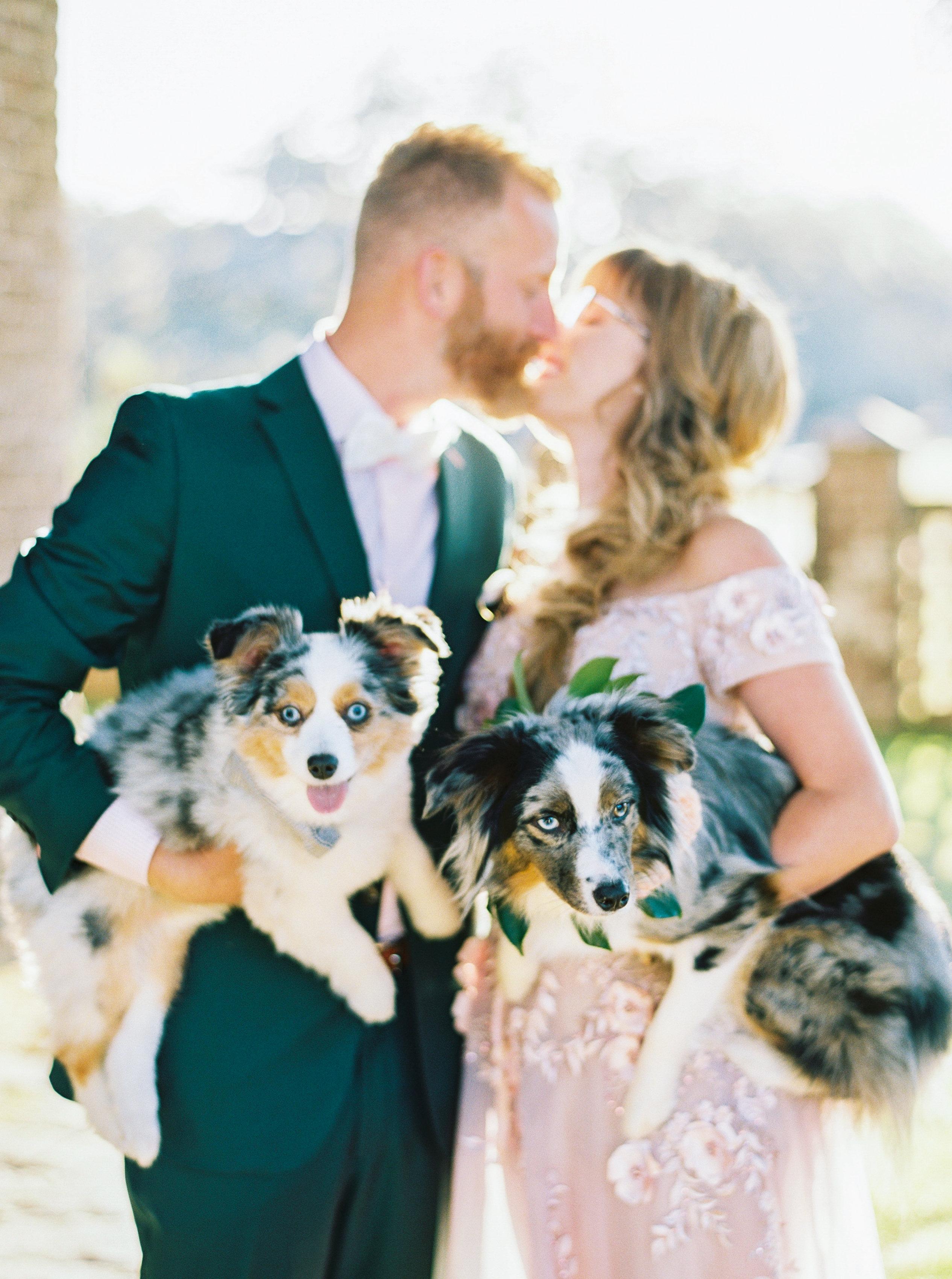 catherine john micro wedding couple dogs perry vaile