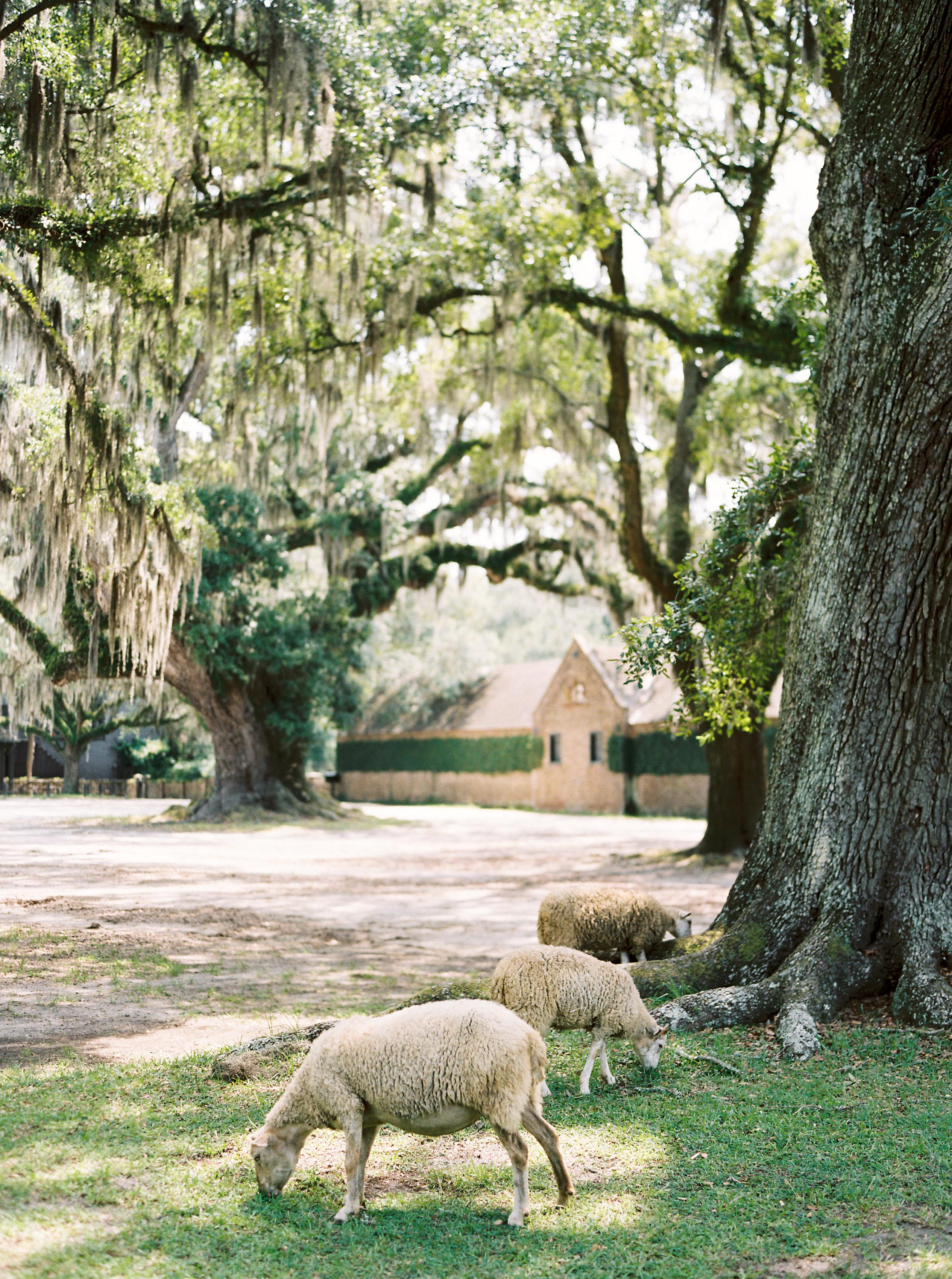 catherine john micro wedding sheep perry vaile