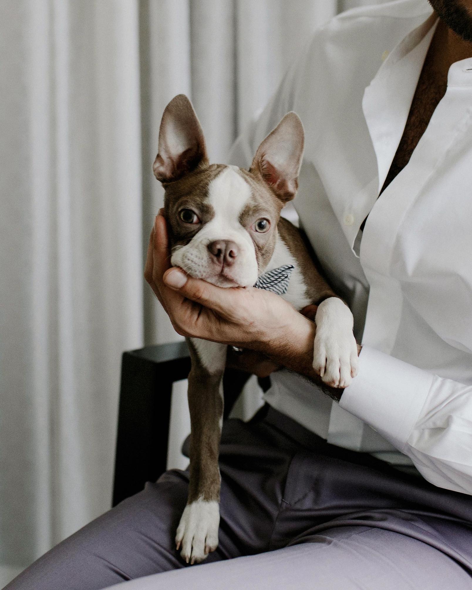 micah jason wedding dog same sex jewish
