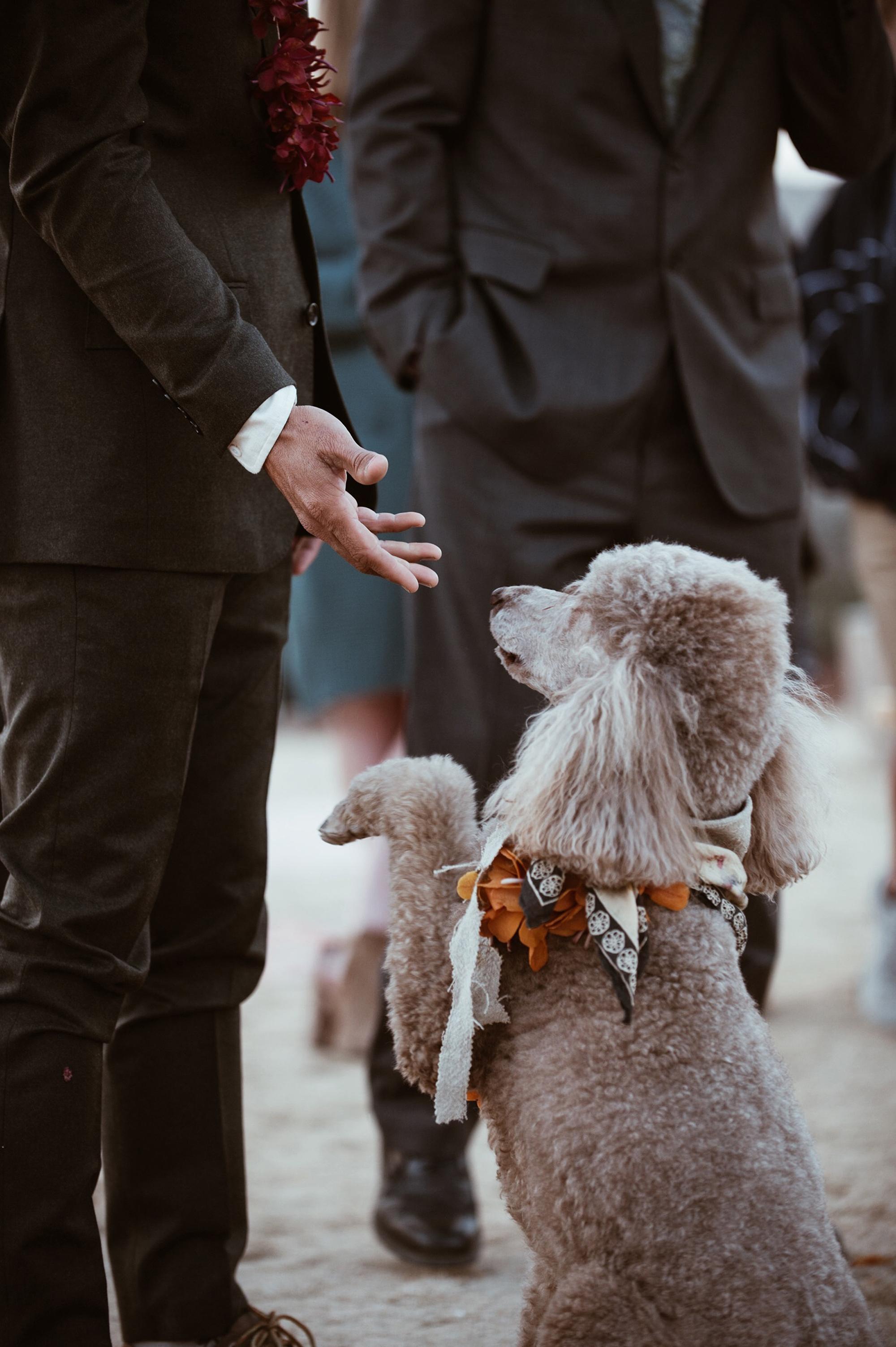darcy matt wedding dog