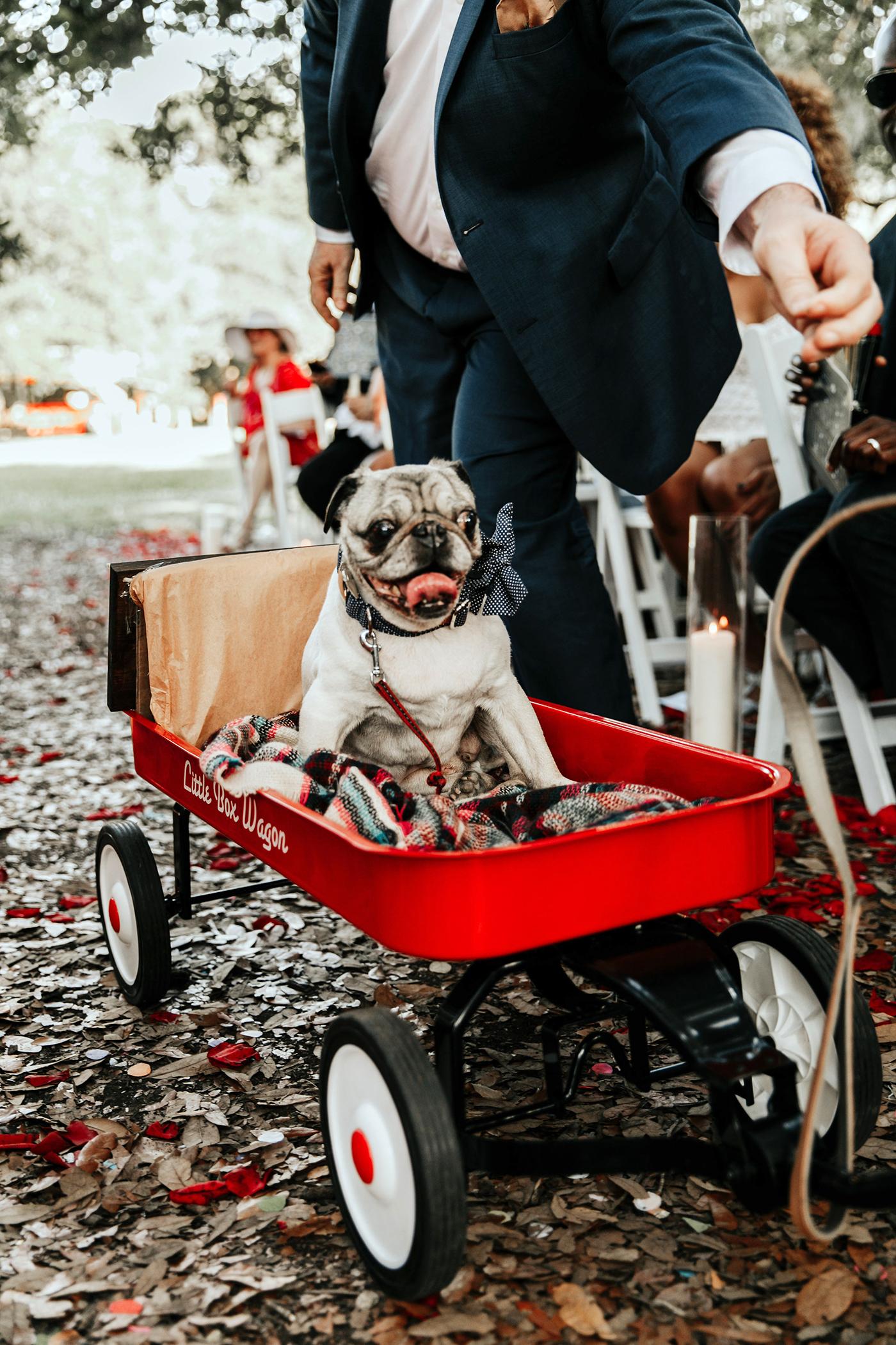 joe tim new orleans wedding dog in red wagon