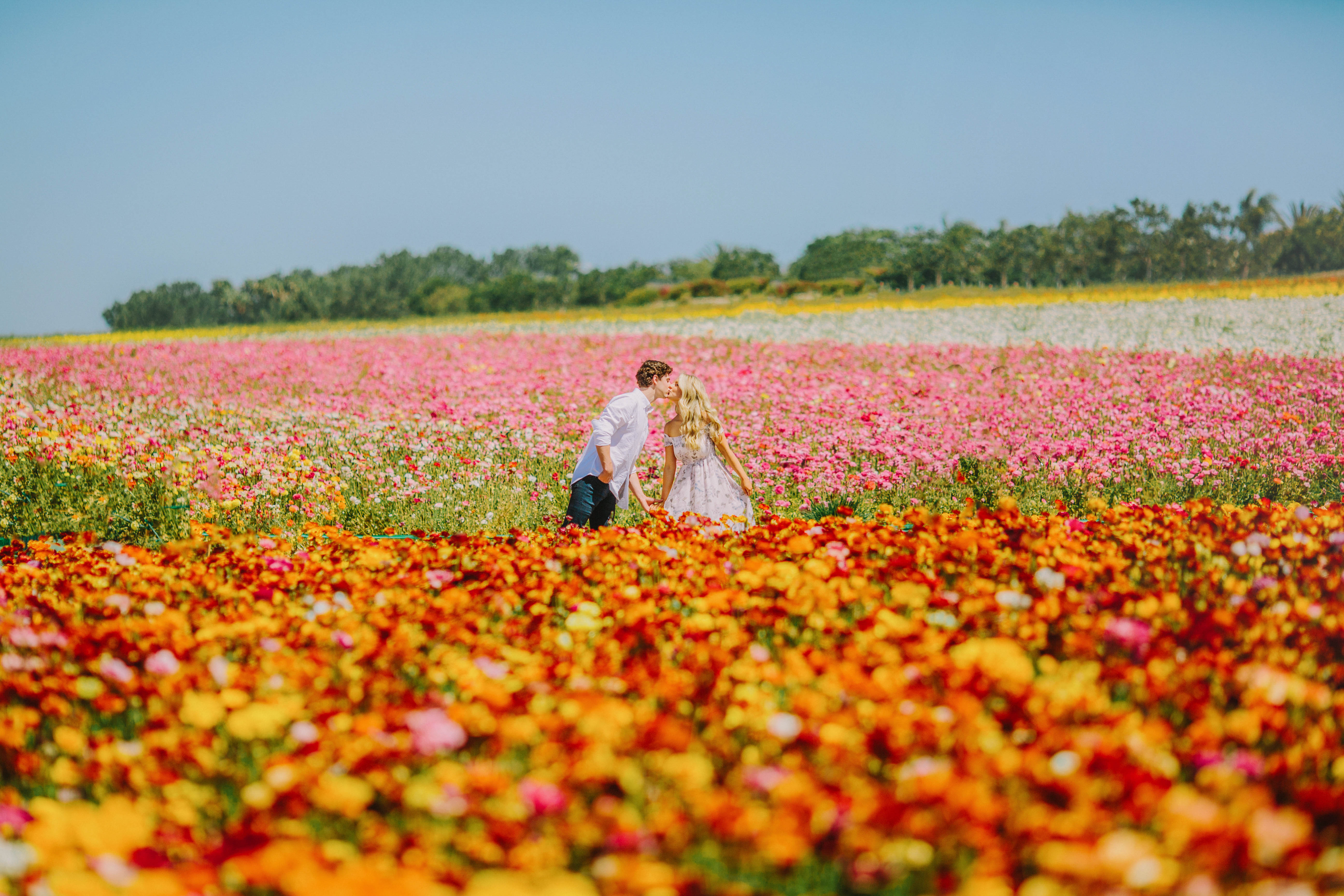 The Flower Fields at Carlsbad Ranch in Carlsbad, California