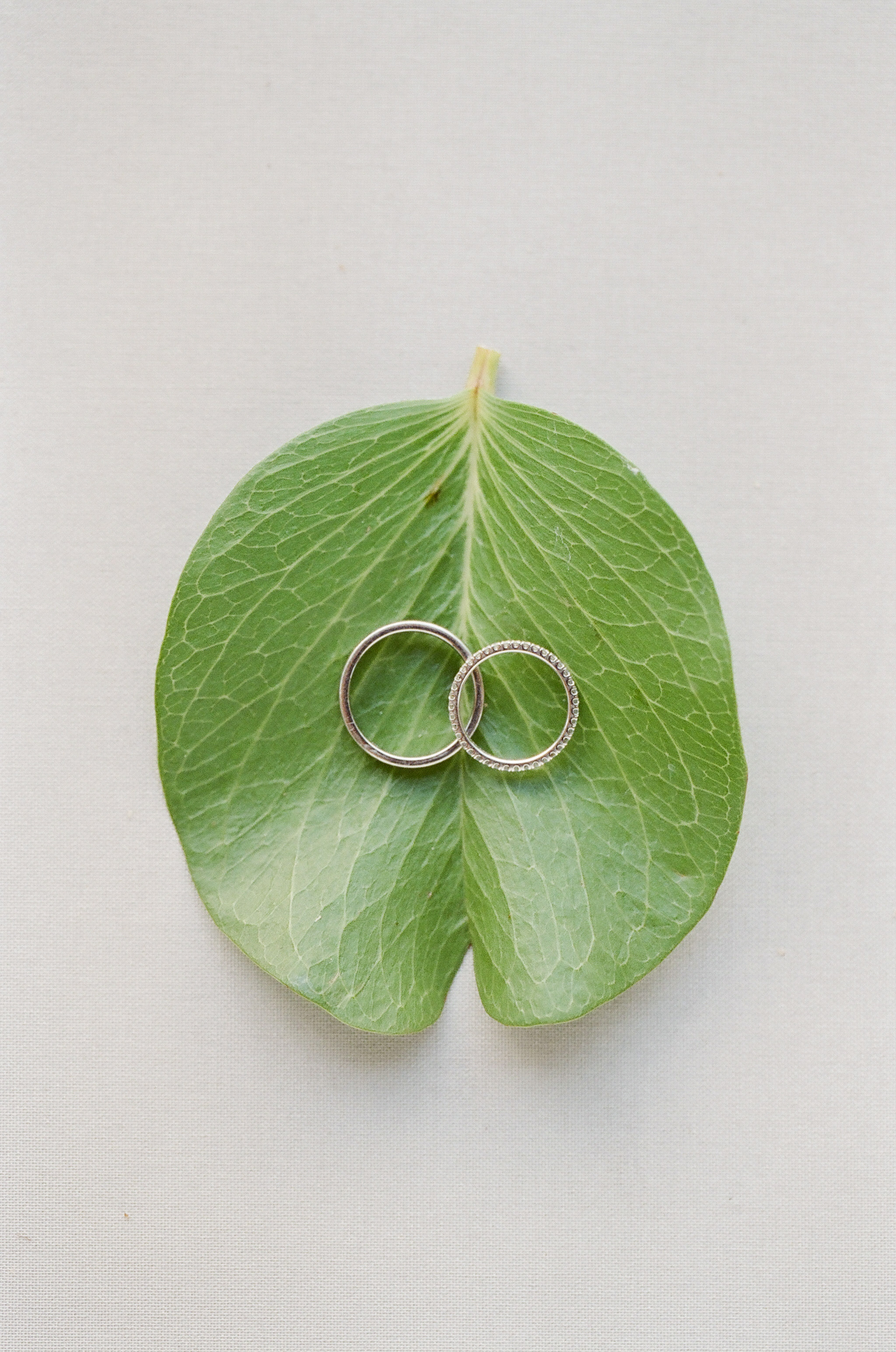 hawaiian wedding bands resting green leaf