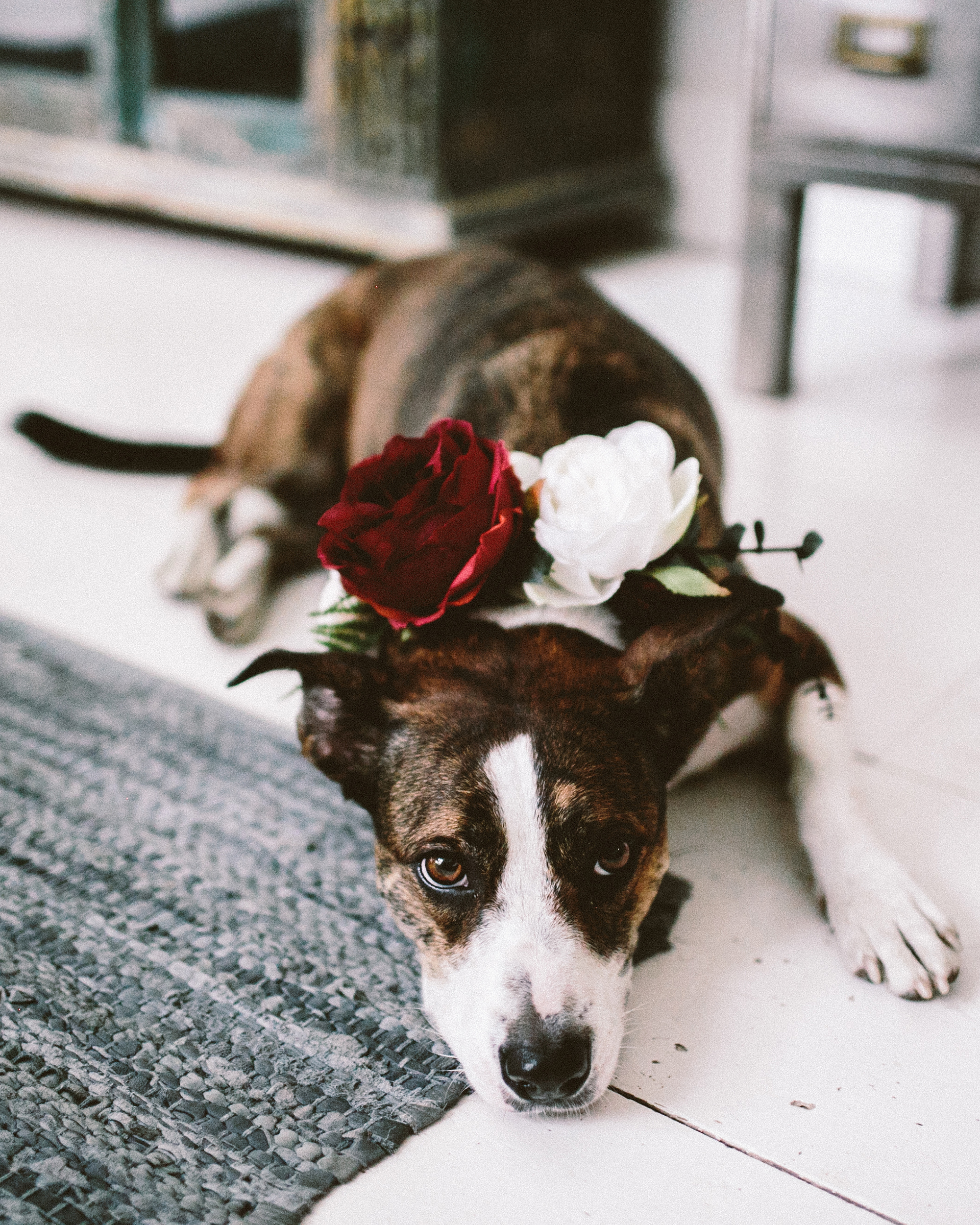 What to Consider Before You Bring Your Pet to Your Destination Wedding