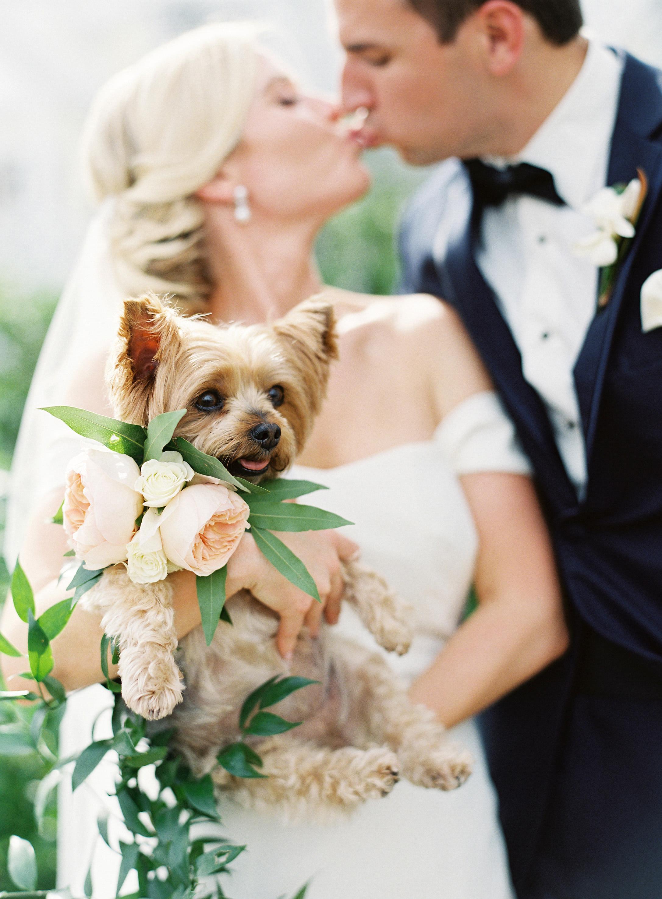 What Are Wedding Pet Coordinators?