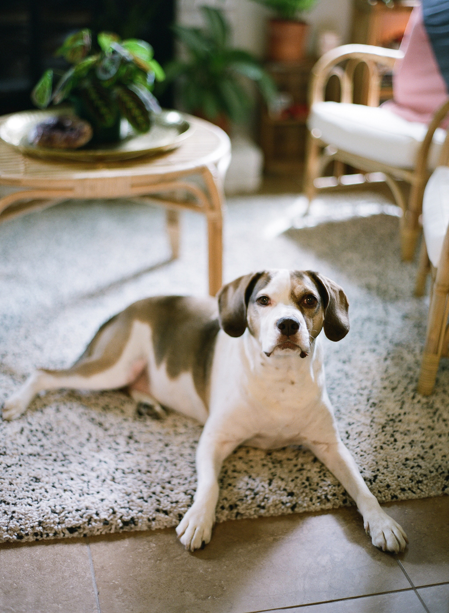 garrett sean wedding dog