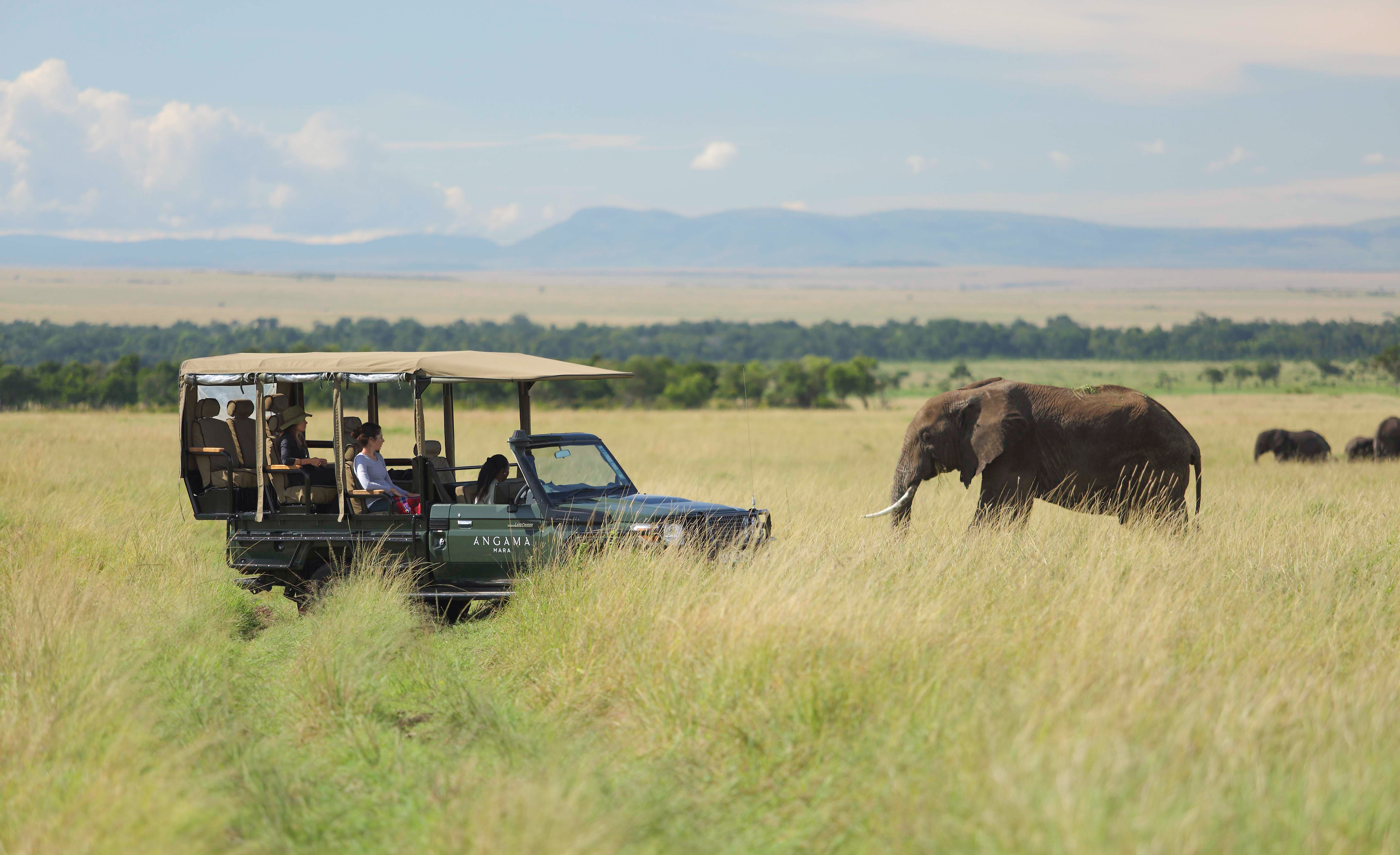 What to Do: Game Drives