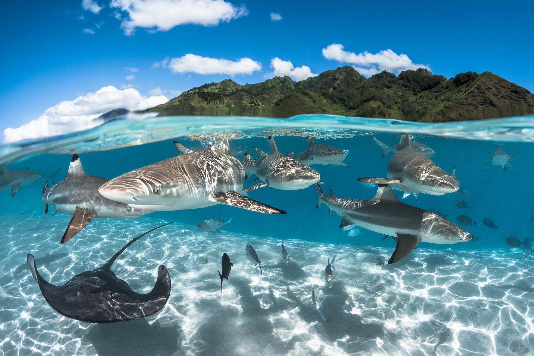 whales in lagoon fakarava