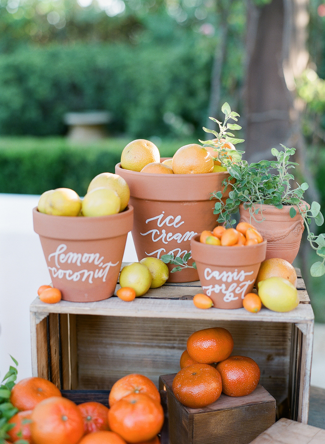 terra cotta pots with fresh produce