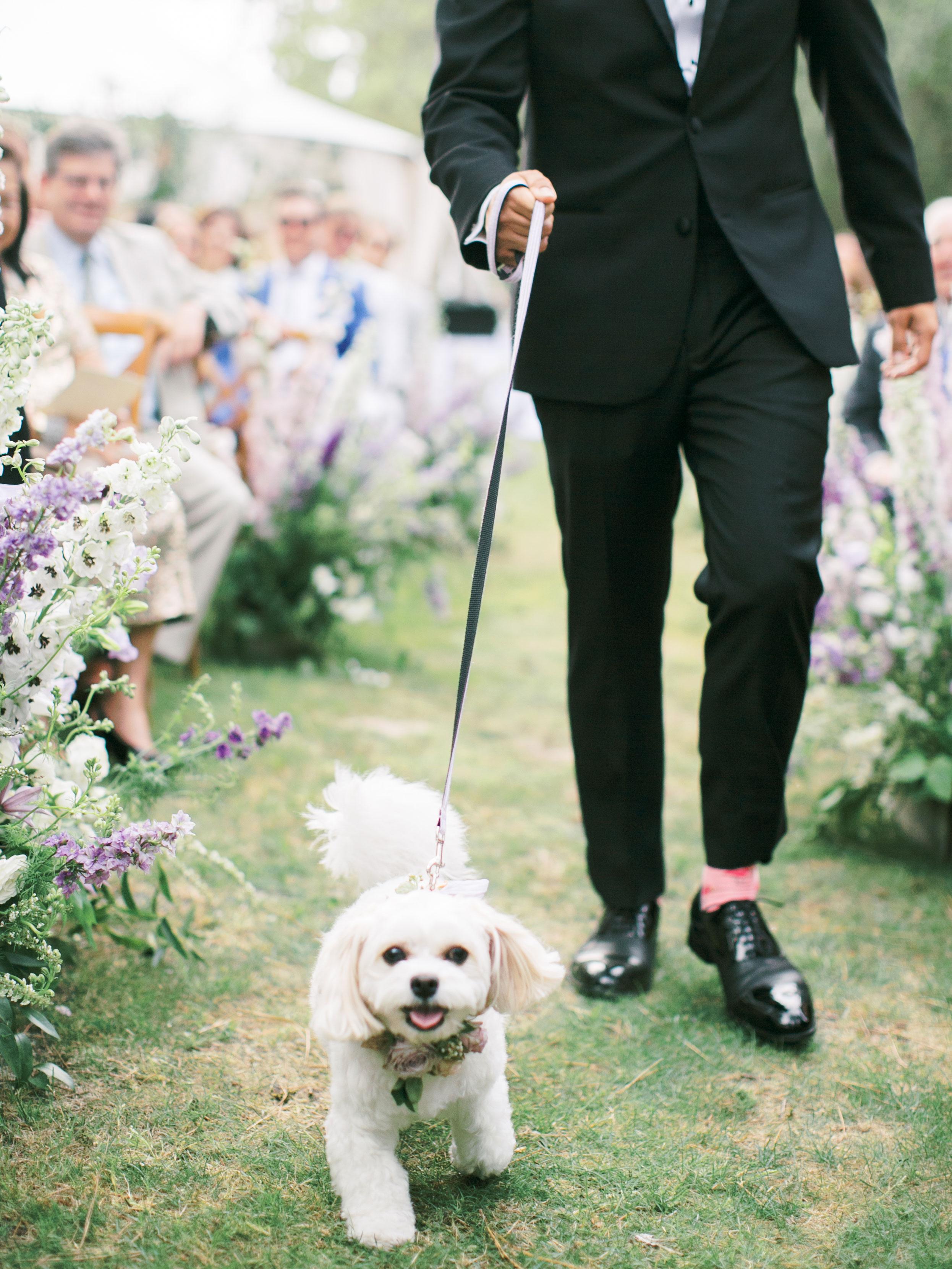 leighton craig wedding dog on leash