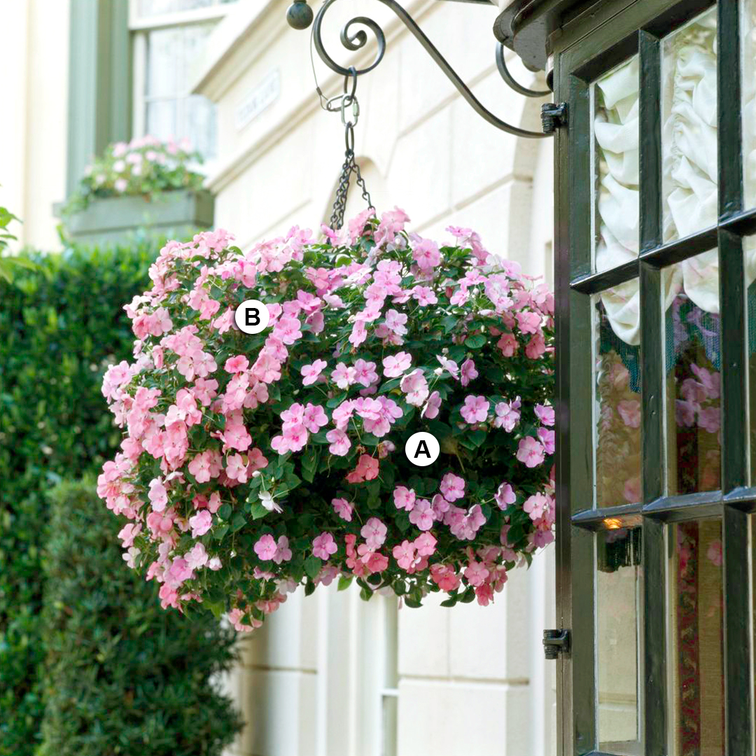 pink impatiens in hanging basket on house exterior