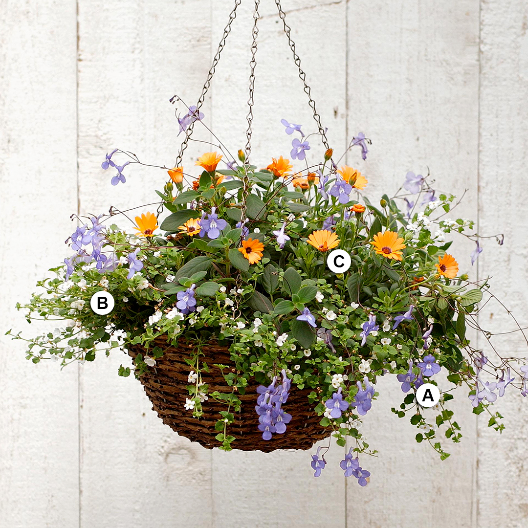 25 Hanging Baskets You Ll Want To Plant Immediately