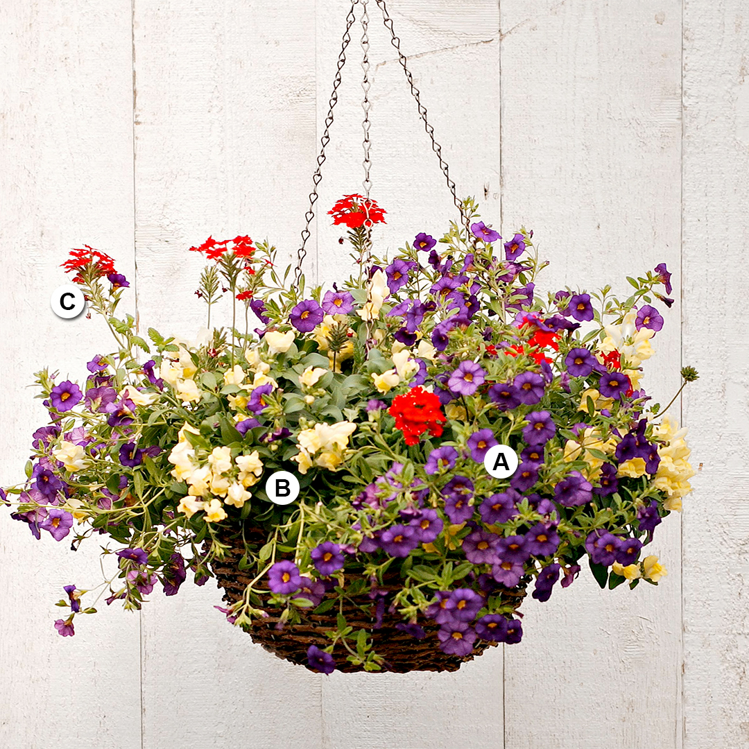calibrachoa snapdragon and verbena in hanging basket
