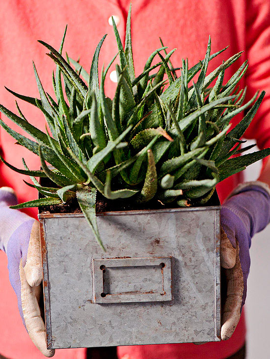 How To Repot a Root-Bound Houseplant