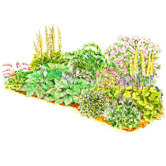Shade Garden Plans | Better Homes & Gardens on plant privacy screen design, plant by number garden plans, plant nursery design, plant landscaping design, plant trees design, plant terrarium design, plant flower garden design, plant pots design, plant with long curly leaves,