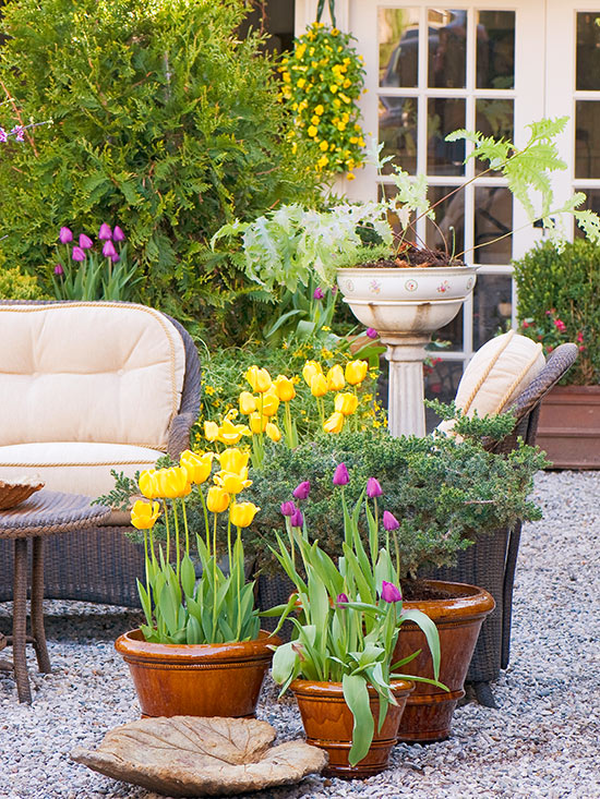 Containers of Bulbs Add Instant Spring