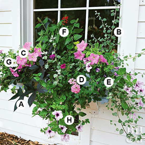 pink flowers container garden
