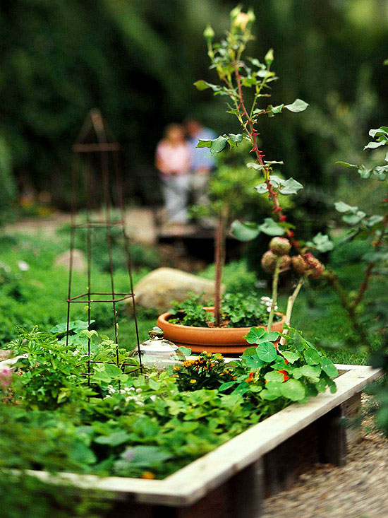 Layout Tips for a Successful Vegetable Garden