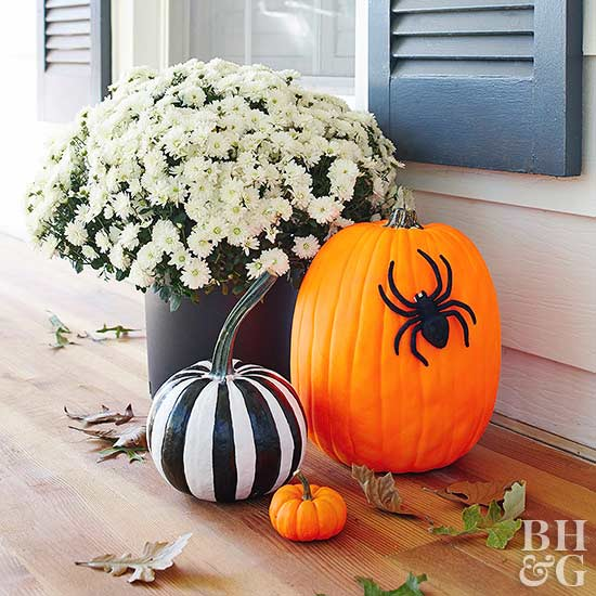 black and white stripped pumpkin and pumpkin with black spider white mum plant