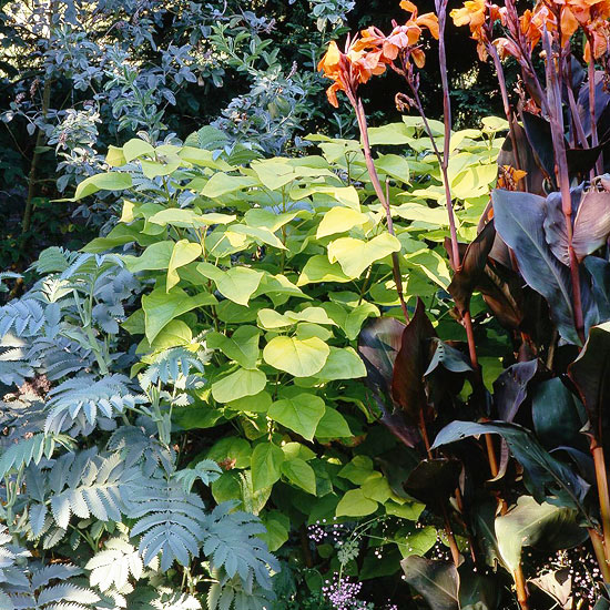 Great Plants For Pacific Northwest Landscapes Better Homes