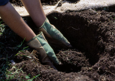 Preparing a Hole for Planting