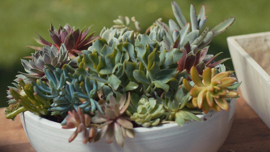 How to Plant a Tabletop Succulent Dish Garden