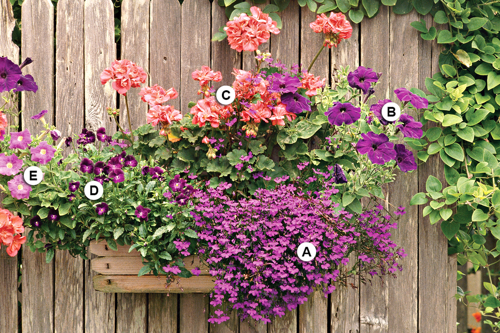 pink and purple flowers in fence hanging planter