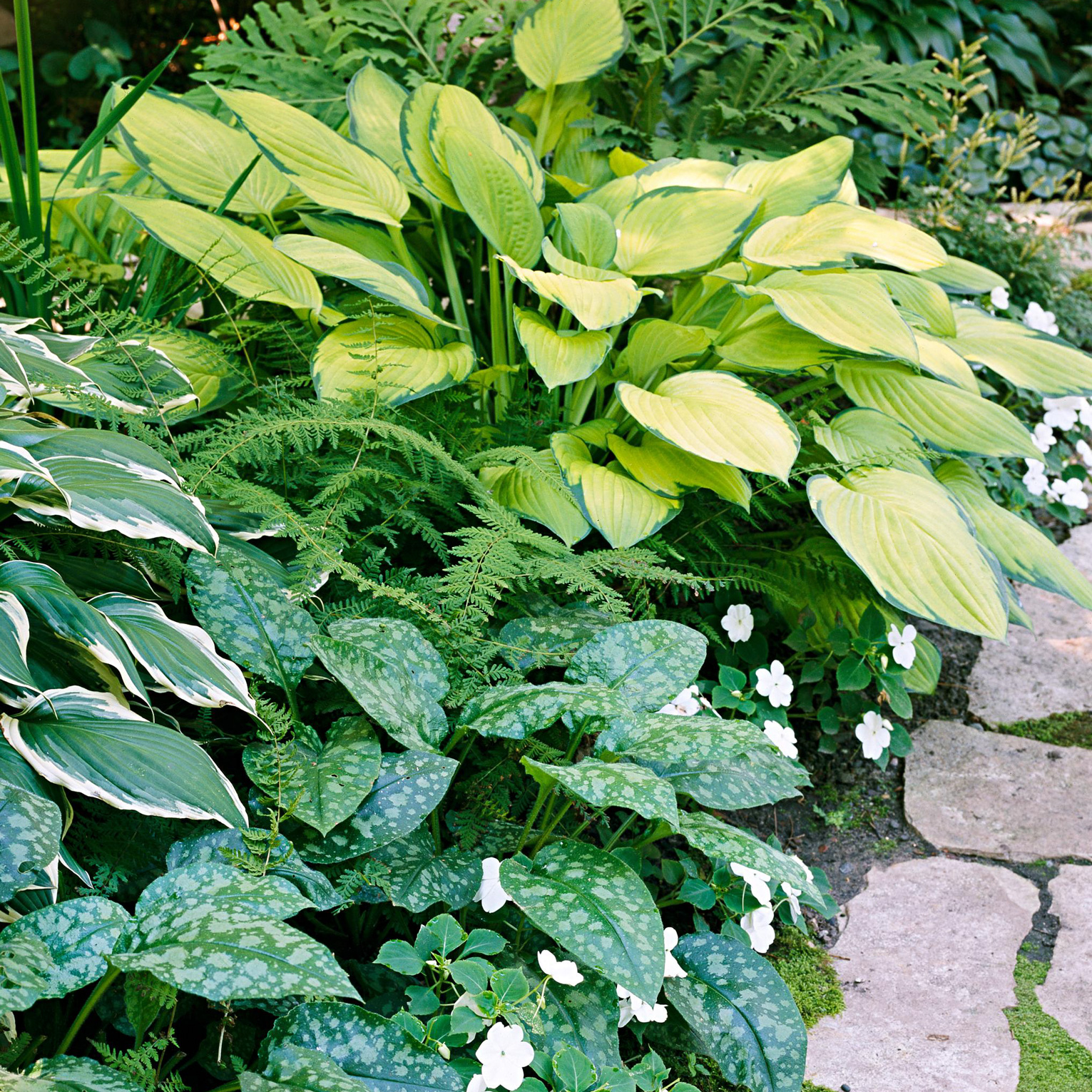 Top Perennials That Thrive In Clay Soil Better Homes Gardens