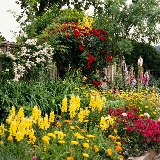 Annuals in the Landscape