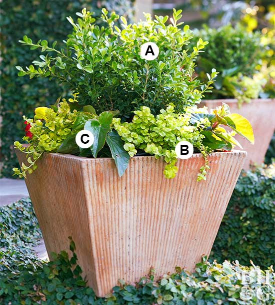 Super Easy Shade Container Garden