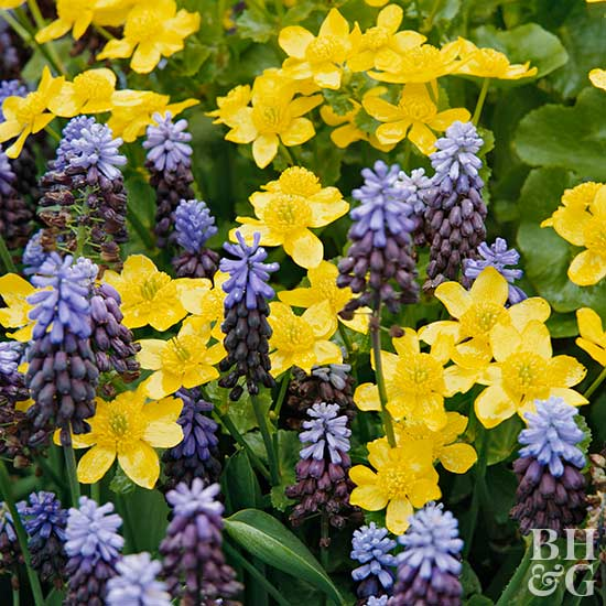 Complementary Combos In Purple And Yellow
